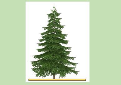 Εργαστηριακές Ασκήσεις Φυσικής Γ΄ Γυμνασίου: μέτρηση του ύψους ενός δέντρου του προαυλίου